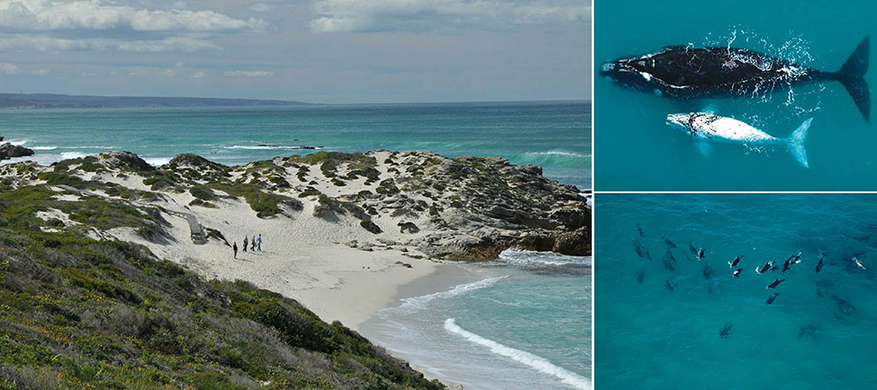 De Hoop Nature Reserve Whale-Watching-Koppie-Alleen
