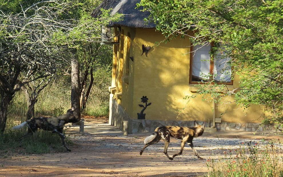 hoedspruit wildlife estate