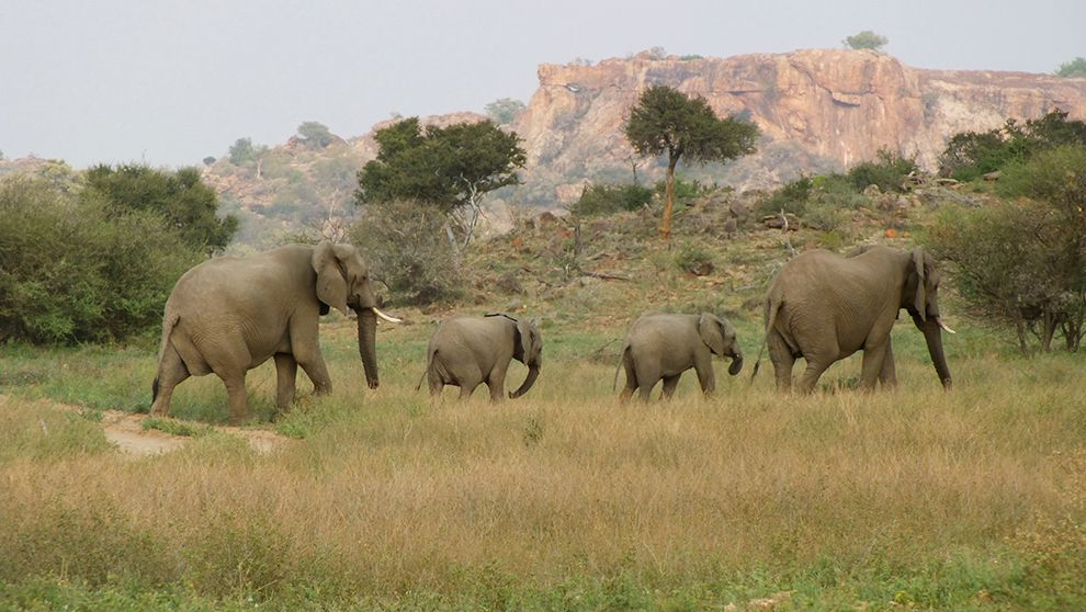 tuli elephants