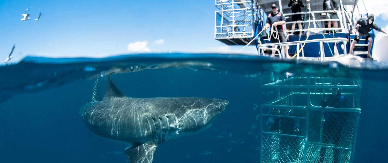 cage-dive-with-sharks-1500×630