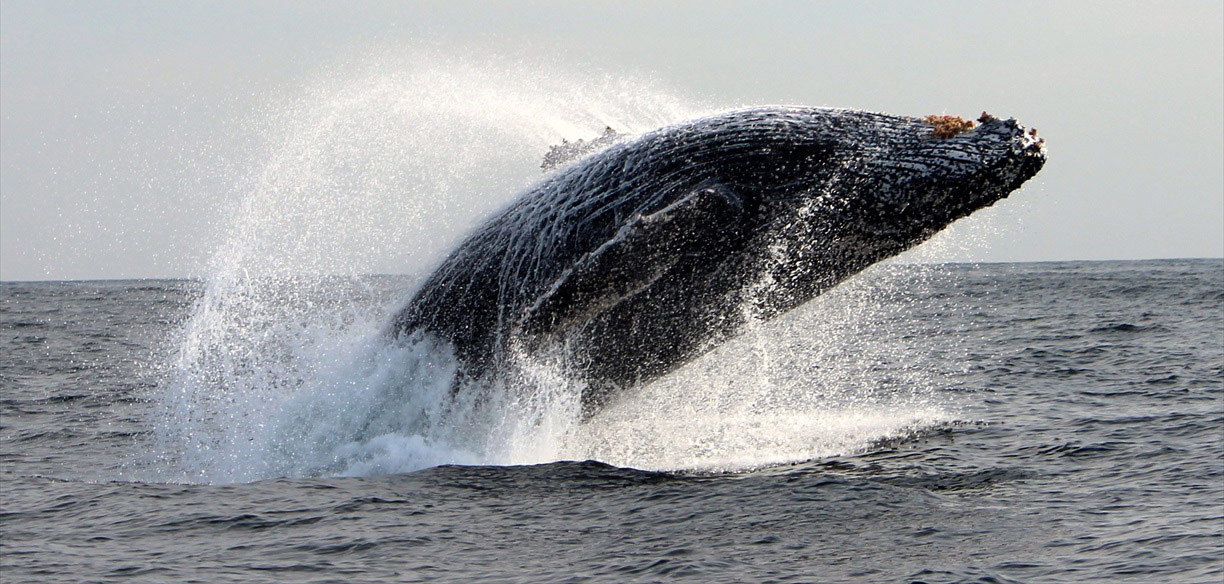 whale_watching_africa